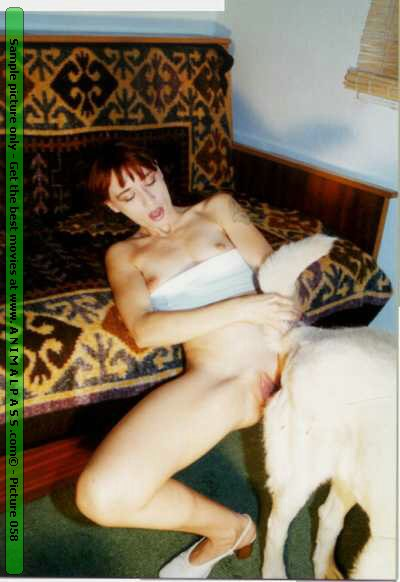 Zoophilie chien