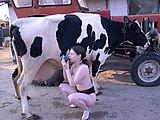 Zoophilie gratuite vache